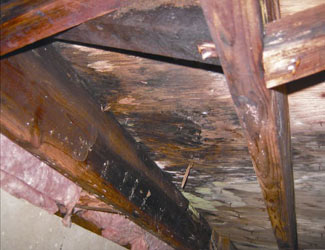 mold and rot in a Chattanooga crawl space